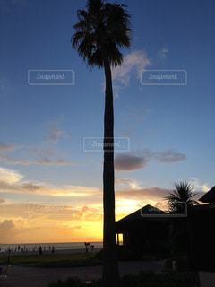 海,夕日,ビーチ,沖縄,ヤシの木,サンセット,オクマ