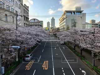 春,桜,豊洲,勝どき,月島,首都大学東京,月島第三小学校,月島総合運動場
