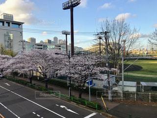 春,桜,豊洲,勝どき,月島,月島総合運動場
