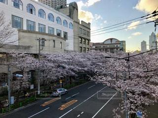 春,桜,豊洲,勝どき,月島,月島第三小学校