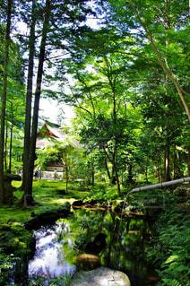 京都の写真・画像素材[453236]