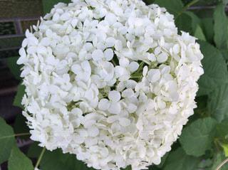 白い花 - No.558515