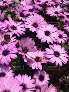 花,庭,ピンク,ガーデニング,桃色,母の分身