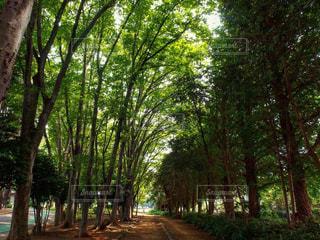 自然,風景,公園,夏,木,綺麗,美しい,街路樹,上尾市,上尾,上尾運動公園