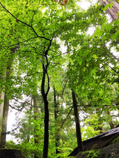 自然の写真・画像素材[464823]