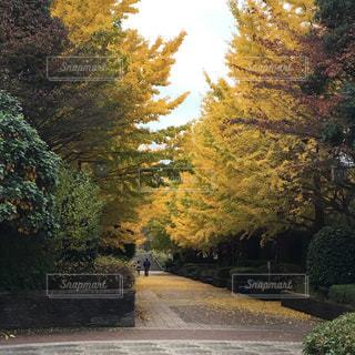 公園,神奈川県,わたしの街,北公園