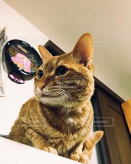 猫,時計,ねこ,ペット,ねこ部,ネコ部,とら柄