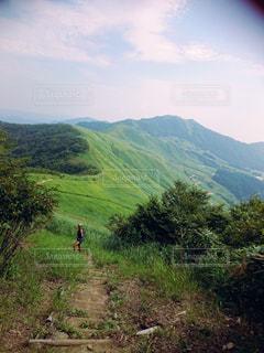 緑の写真・画像素材[467813]