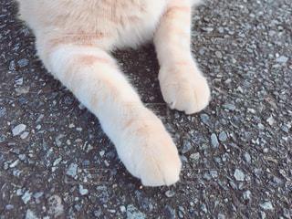 もこもこな猫の手も借りたいの写真・画像素材[874008]