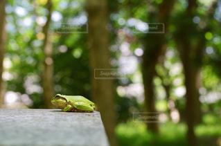 テーブルに座っているカエルの写真・画像素材[1160053]