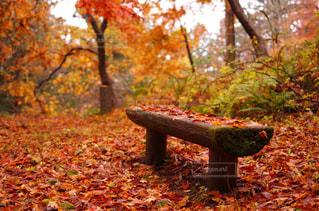 紅葉,もみじ,椅子,高山