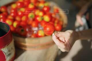 トマトの写真・画像素材[3679507]
