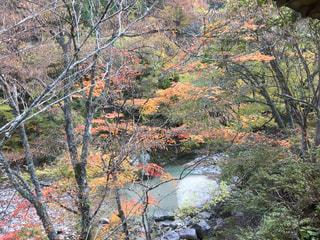自然,秋,紅葉,川,長野県,わたしの街,阿智村,季節の変わり目