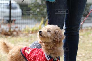 犬の写真・画像素材[445712]