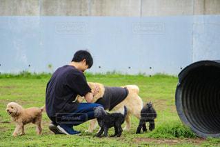 犬の写真・画像素材[449061]