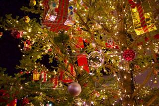 クリスマス ツリーの写真・画像素材[916435]