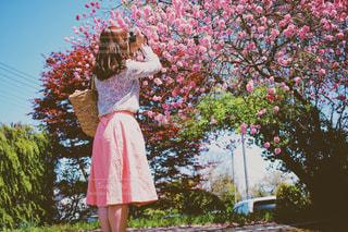 春模様の写真・画像素材[1885359]