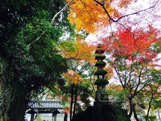京都,神社,宇治