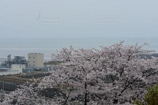 熊本,有明海,一眼レフ撮影,四ツ山神社,荒尾市