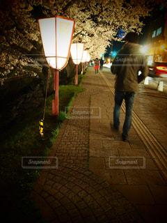 男性,桜,夜桜,桜並木,青森,弘前,バックショット,弘前公園,ダンナ様,弘前こうえん