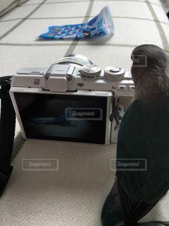 カメラの写真・画像素材[459216]