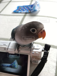 カメラの写真・画像素材[459643]