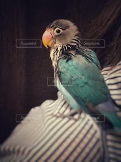 動物の写真・画像素材[513667]