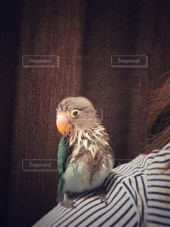 動物の写真・画像素材[513670]