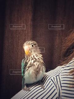 動物の写真・画像素材[513693]