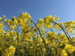お花畑の写真・画像素材[596350]