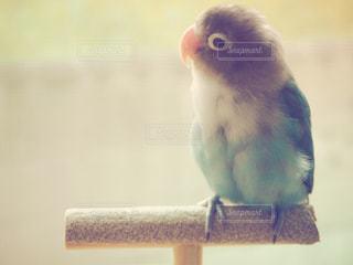 小鳥 - No.737032