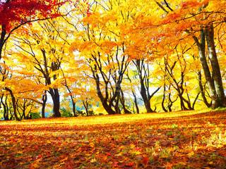公園の木 - No.856403