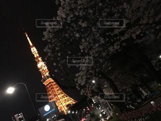 春,桜,東京タワー,夜景,東京,TOKYO