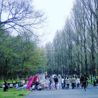 風景,公園,春,東京,葛飾,水元公園