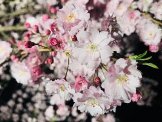 近くの花のアップの写真・画像素材[1151053]
