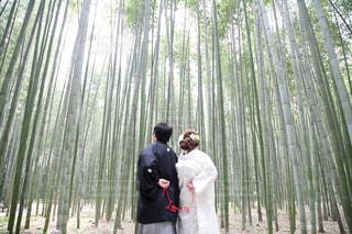 京都の写真・画像素材[459152]