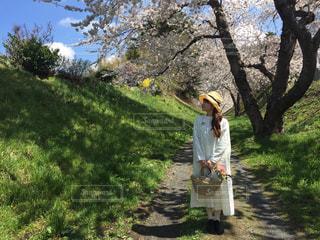 春色コーデ - No.457379