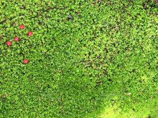 緑の写真・画像素材[456272]