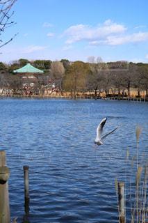 鳥,上野,不忍池