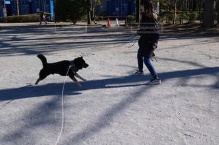犬 - No.450126