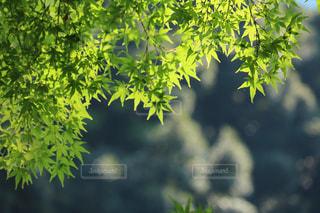 緑の写真・画像素材[454529]
