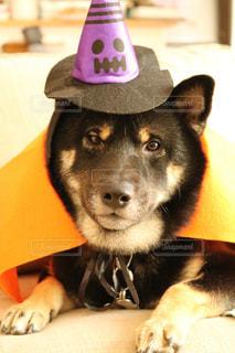 帽子をかぶった犬の写真・画像素材[854940]