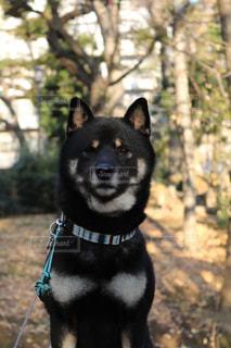 黒と茶色の犬の写真・画像素材[985564]