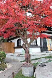 秋,紅葉,赤,樹木,鎌倉,長谷寺,12月