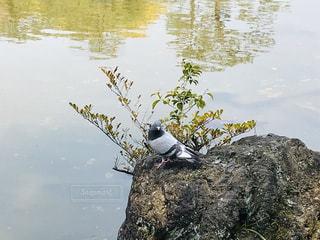 岩の上に座っている鳥の写真・画像素材[3012831]