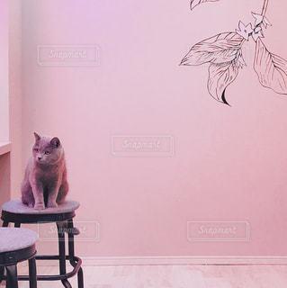 椅子の上に座っている猫の写真・画像素材[3012836]