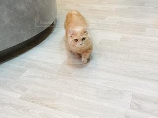 猫の写真・画像素材[3012837]