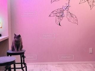 グレーの猫の写真・画像素材[3421254]
