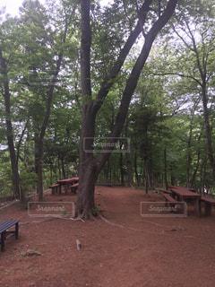 公園,千葉県,佐倉市,大蛇大里