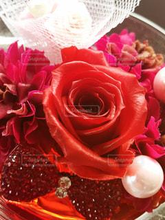 花の写真・画像素材[562519]